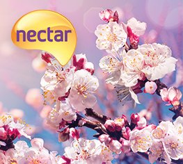 Collect 1,000 bonus Nectar points when sending internationally in April